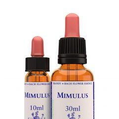 Mimulus / Мимулус