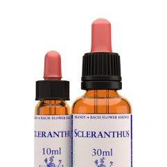 Scleranthus / Хрущялка